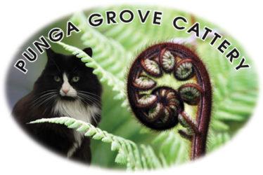 Punga Grove Cattery